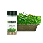 Urban Cultivator® Licorice Shiso Seeds, 26g - SD-SHI