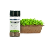 Urban Cultivator® Pepper Arugula Seeds, 33g - SD-ARU