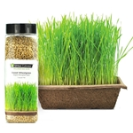 Urban Cultivator® Sweet Wheatgrass Seeds, 799g - SD-WHE